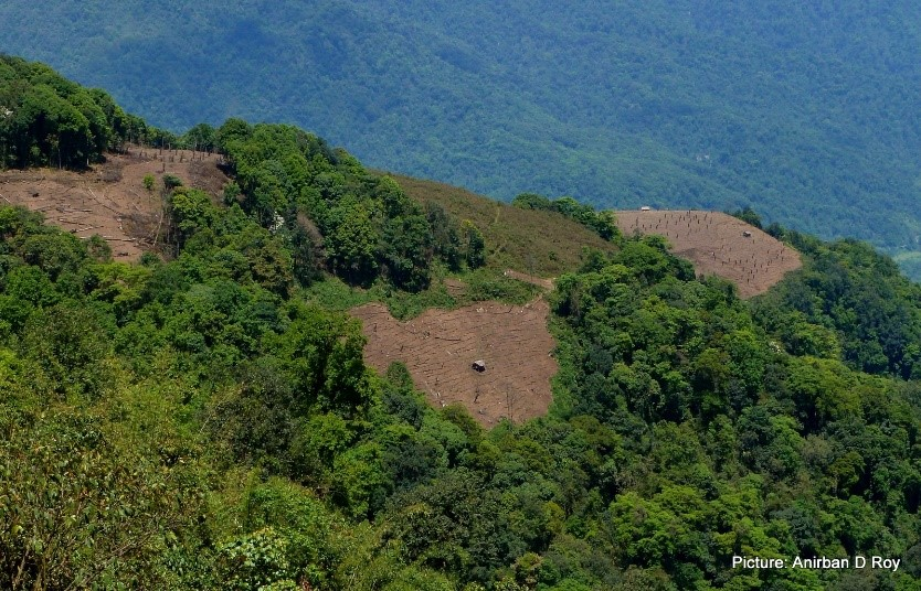Changing Fields, Changing Fallows: Swidden & Change in Upper Siang, Arundachal Pradesh, India