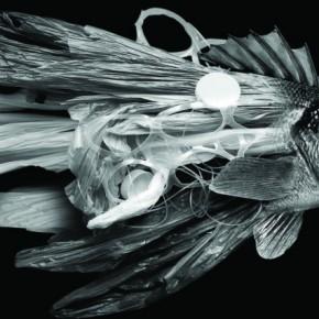 Laserow-Scott-Plastic-Fish-e1442932483452