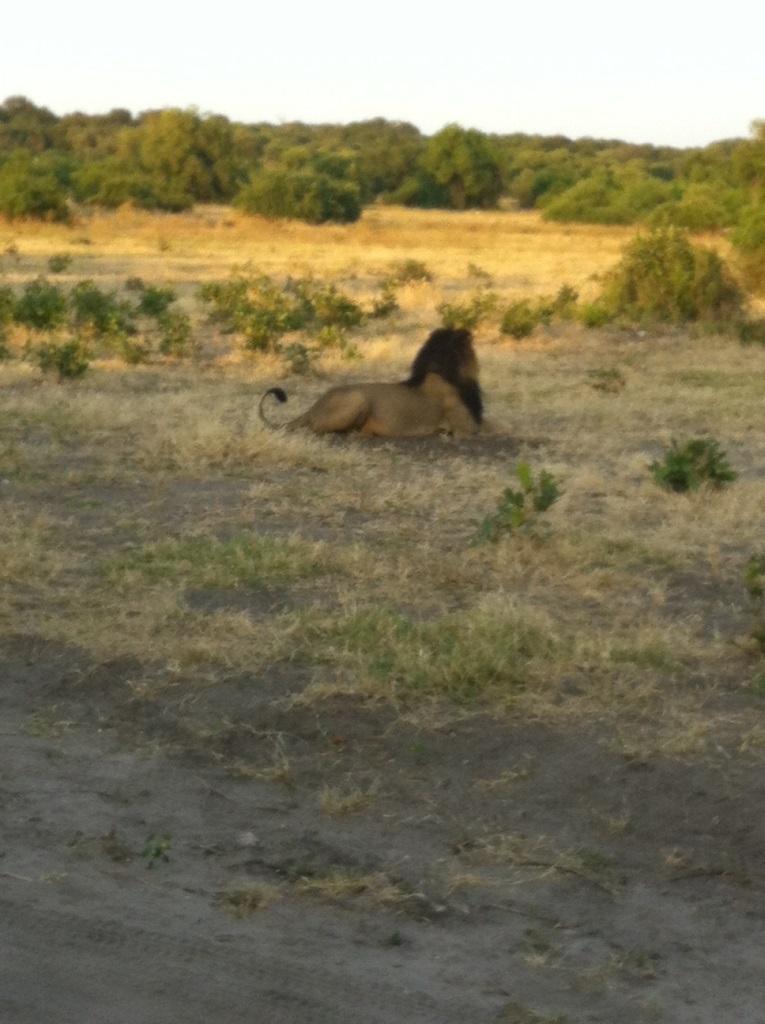 safari02