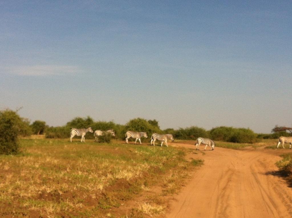safari03