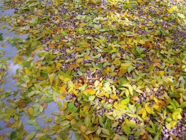 Fall leaves on the sidewalk
