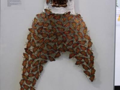 mariposa art