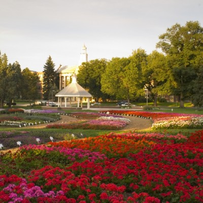 Varieties of flowers are tested in Colorado's climate at the Annual Trial Gardens, Colorado State University.