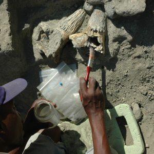 Maasai man excavating Olduvai Gorge