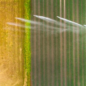 Sprinkler watering an agricultural field