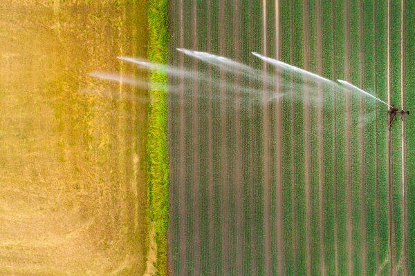Sprinkler watering an agricultural field
