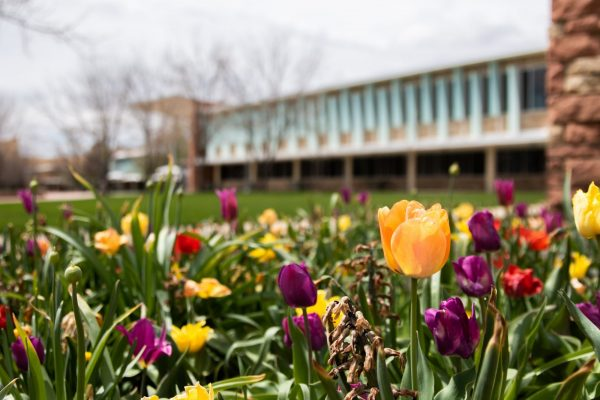 Tulips outside the Lory Student Center