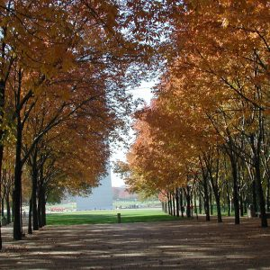 A row of autumn trees with a trail down the center of the grove.