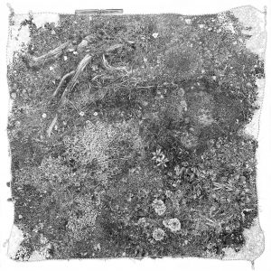 Cedra Wood's Plot drawings