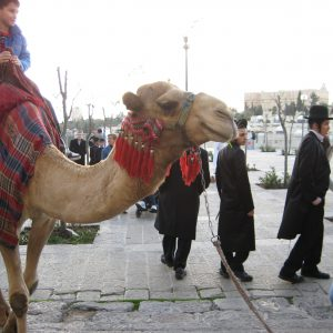 Jerusalem: boy riding camel