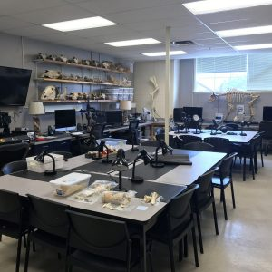 Zooarchaeology and Paleoanthropology Lab