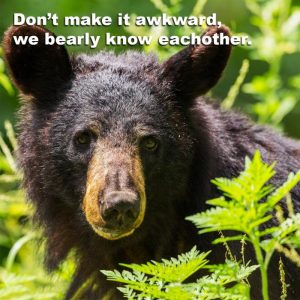 Bear with the words 'Don't make it awkward, we bearly know eachother.'