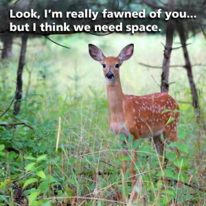 Deer with text that reads 'Look, I'm really fawned of you, but I think we need space'