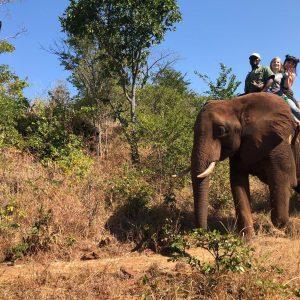 Kelsea Altheim riding an elephant