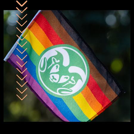Pride flag with CSU Ram head