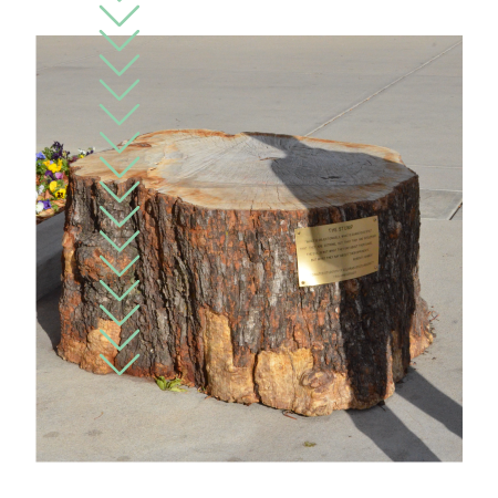 The Stump in the Lory Student Center Plaza